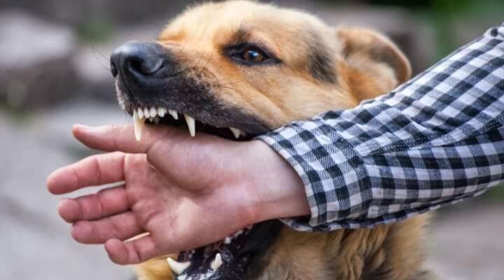 Arizona Dog Bite Lawyers